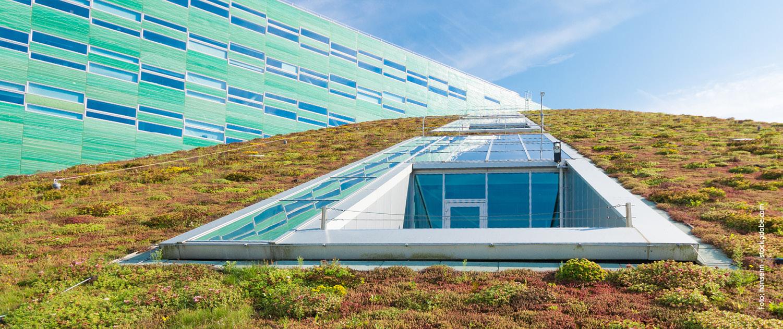 Dachbegrünung zur Regenwasserregulierung.